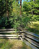 Fence in the Forest. Split rail fence at the Head of the Metolius - near Camp Sherman, OR royalty free stock photo