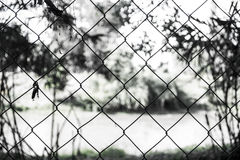 Fence in the forest. A view of a fence with the background unfocused Stock Images