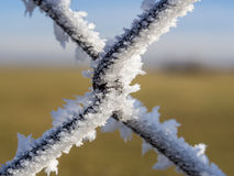 Fence with frost Royalty Free Stock Photo
