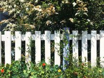 The fence in garden. Plants and flowers in the garden ,beside the fence stock photos