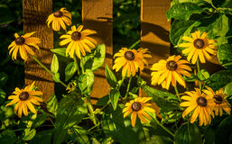 Fence Gardening Stock Image