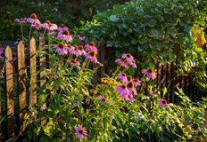 Fence Gardening Stock Photos