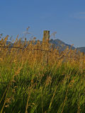 Fence and Grasses. This image of the roadside grasses and the fence with the mountains in the background was taken in NW Montana Royalty Free Stock Images