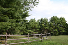 Fence and green grass with trees in a field Stock Image