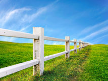 Fence with green grass Royalty Free Stock Image