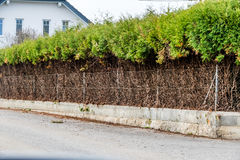Fence and green hedge Royalty Free Stock Images