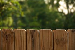 Fence with greenery Stock Image