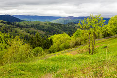 Fence on hillside meadow in mountain Royalty Free Stock Photography