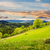 Fence on hillside meadow in mountain at sunrise Stock Photo