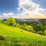 Fence on hillside meadow in mountain at sunrise Stock Photography