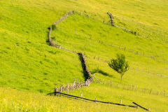 Fence on hillside meadow with tree Royalty Free Stock Photos
