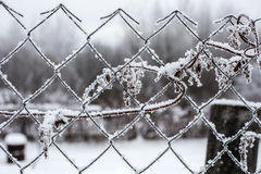 Fence with hoarfrost. Metal fence with hoarfrost in winter royalty free stock images