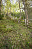 Fence inside a typical forest of the Italian Alps Stock Images