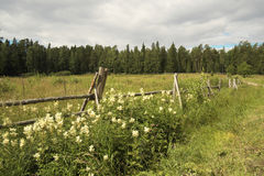 Fence. Island Valaam. Russian North. Fence pastures next to the road Stock Images