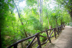 Fence in the jungle. Road and palms stock photography