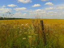 Fence in kent. Fencepost at a field in kent sunny day fluffy clouds Stock Image