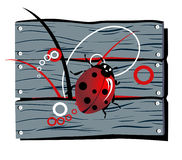 Fence lady-beetle Stock Images