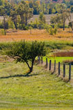 Fence line and fall colors. Foreground fence and wild green grasses, with fall colors spotting the background Stock Image