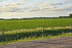 Fence Line. A golden sunrise glow on a corn field Stock Photo