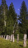 Fence line near trees. Old tree fence line near the forest Royalty Free Stock Images