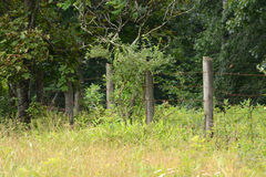 Fence line Royalty Free Stock Image