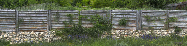 Fence from a log with ivy Royalty Free Stock Photography