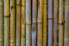 Fence made of bamboo trunks in closeup, natural japanese background, Asian garden decoration. A fence made of bamboo trunks in closeup, natural japanese royalty free stock photography