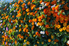 Fence made of flowers Royalty Free Stock Photo