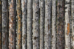 Fence made of logs with bark as background Stock Images