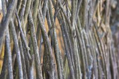 Old abandoned fence of branches. A fence made of twigs Stock Images