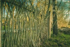 Old abandoned fence of branches. A fence made of twigs Royalty Free Stock Photography
