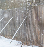 A fence made of wood falls down and his back legs in the winter Royalty Free Stock Images