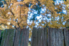 Fence and Maple 2 Royalty Free Stock Photos