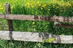 Fence. The fence on meadow dandelion Royalty Free Stock Images