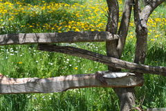 Fence. The fence on meadow dandelion Stock Photo