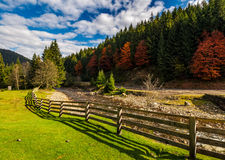 Fence on the meadow near forest river in autumn mountains. Few red foliage trees among spruce forest on hill Royalty Free Stock Images