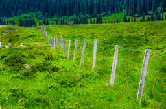 Fence in meadow Royalty Free Stock Images