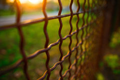 Fence with metal grid in perspective Stock Images