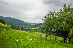 Fence near apple tree on hillside meadow in mountain Royalty Free Stock Photos