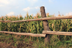 Fence near corn fild Stock Photography