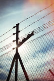 Fence netting in backlighting Stock Images