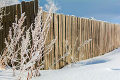 The fence next to the tree in winter, a Sunny winter day. The tree stands next to a fence on a Sunny winter day on blue sky background Stock Image