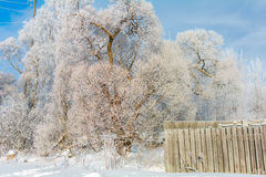 The fence next to the tree in winter, a Sunny winter day. The tree stands next to a fence on a Sunny winter day on blue sky background stock images