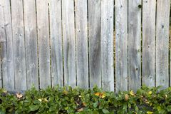 Fence with Pachysandra Stock Image