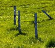 Fence Pasture Green Grass Royalty Free Stock Images