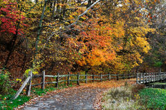 Fence And Path In Autumn Stock Image