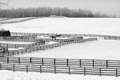 Fence Patterns - Black and White. Wooden fences and a couple of horses form an attractive black and white pattern near West Charlton, New York Stock Photos