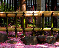 Fence and petals. A bamboo fence and some cherry flowers petals Stock Photos