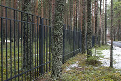 Fence in a pine forest Royalty Free Stock Photos