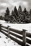 Fence and Pine trees Royalty Free Stock Image